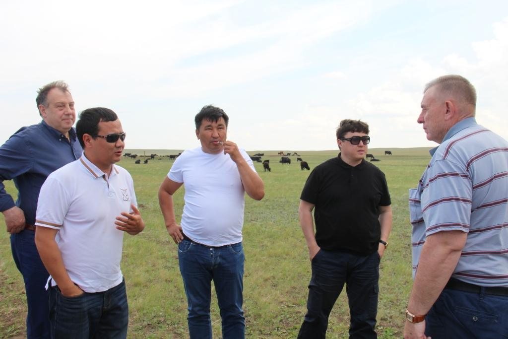 Томские аграрии изучили опыт Казахстана в мясном скотоводстве